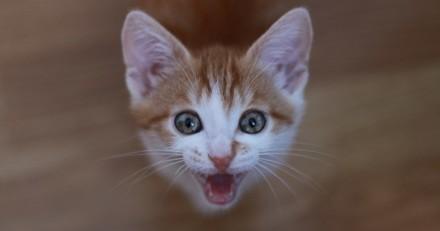 La Vie Secrète des Chats : Leur mystérieux langage décrypté dans un nouvel épisode