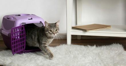 Combien de temps mon chat peut-il rester seul ?