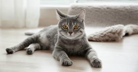 Est-ce que je manque à mon chat quand je ne suis pas là ?