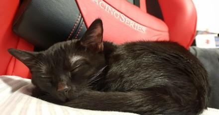 Atteinte de nombreuses maladies, cette petite chatte noire profite désormais de la vie