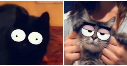 Snapchat lance des filtres pour votre chat (et bientôt pour les chiens)