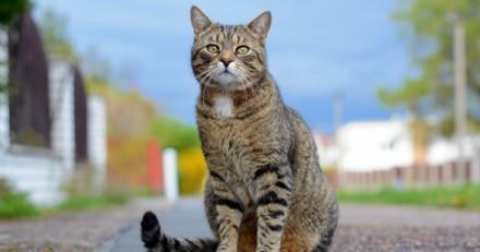 Faut-il VRAIMENT enfermer son chat pour sa santé et la nôtre ?