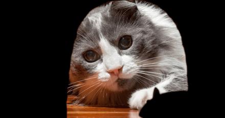 Leur chat gratte dans un coin de leur maison, la famille n'en croit pas ses yeux en s'approchant