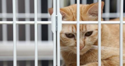 Record d'abandons de chats et de chiens cet été, la SPA pousse un cri d'alarme