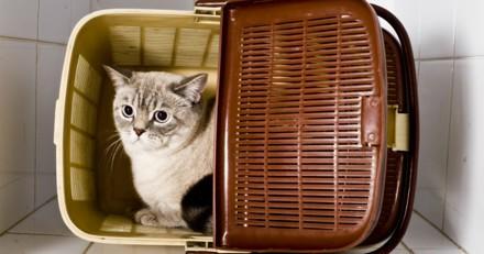 Comment savoir si mon chat est stressé ? Les signes du stress qui doivent vous alerter