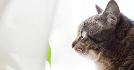 Elle rentre chez elle et son chat est bizarre, quand elle comprend pourquoi elle sort en courant