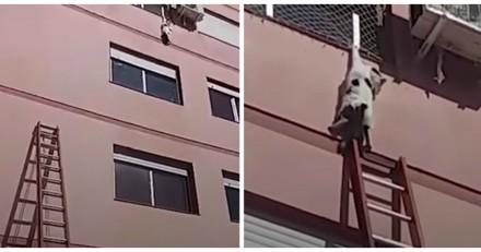 Suspendu par une patte du 4e étage, ce chat a eu beaucoup de chance (Vidéo)