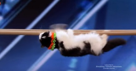 Des chats font des tours incroyables dans un numéro pour l'émission Incroyable Talent : pour ou contre ? (Vidéo)