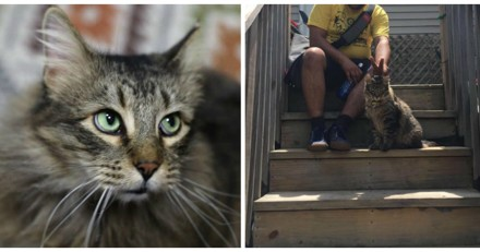Elle perd son chat, mais le refuge refuse de lui rendre pour une raison très précise