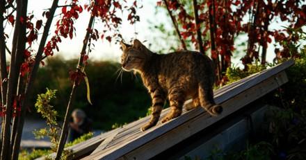 Un tueur en série de chats sévit à Londres : mais qui est-il ?