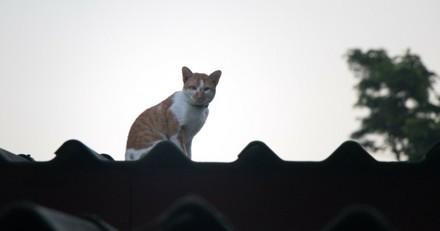Elan de solidarité pour le chat coincé sur un toit depuis 13 jours