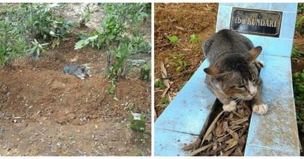 Il croise un chat dans un cimetière et lui donne à manger, le lendemain il n'en croit pas ses yeux