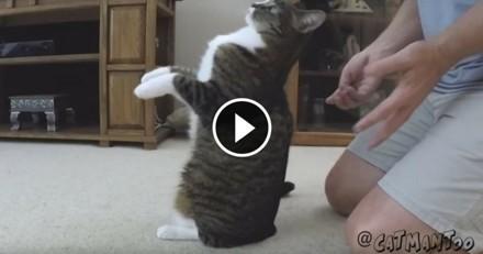 Ce chat accorde une confiance aveugle à son humain (Vidéo du jour)