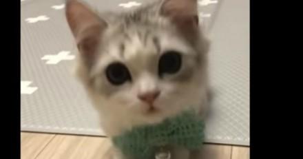 Le plus mignon des chatons pose comme un pro (Vidéo du jour)
