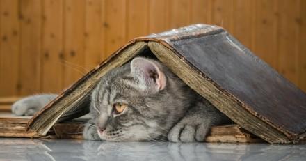 Et si on construisait des refuges pour chats dans les universités ?