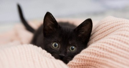 La femme veut adopter un chaton : quand elle voit sa bouche, elle sort en hurlant du refuge !