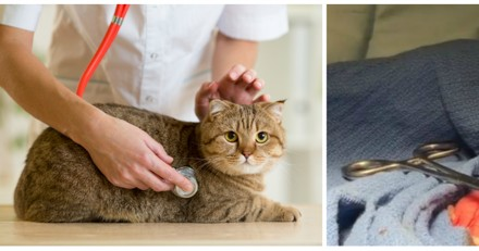 Ils emmènent leur chat faire une visite de routine : le vétérinaire se pétrifie en voyant son estomac