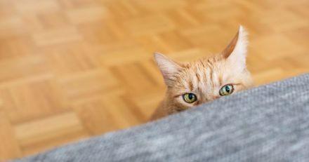 Ce chat de refuge a un marquage très cocasse sur le museau