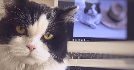États-Unis : un député lance l'idée d'interdire les animaux lors du télétravail