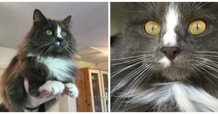 Chaque jour depuis 2 ans, ce chat reçoit une drôle de visite (Vidéo)