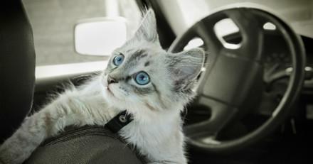 Essonne : il vit pendant trois mois dans sa voiture avec 13 chats