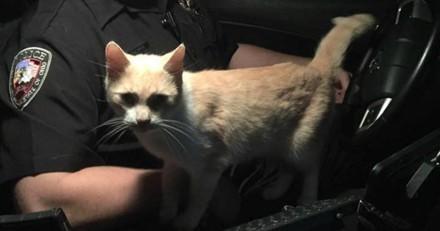 Ce chat croise une voiture de police et prend une décision qui va changer sa vie