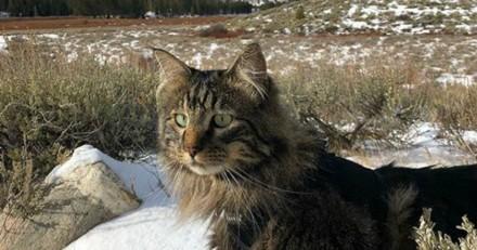 Ce chat Maine Coon a une vie extraordinaire (Vidéo du jour)