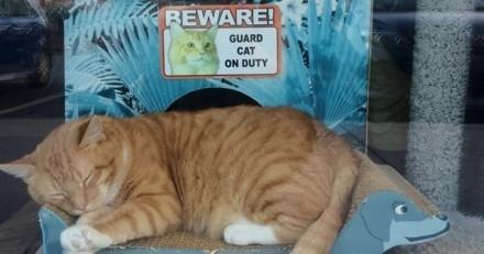 Un chat trouve un job dans une boutique pour animaux