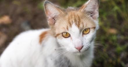 Cette femme a dépensé plus de 20 000 dollars pour aider des chats