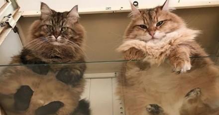 10 raisons pour lesquelles un propriétaire de chat devrait TOUJOURS avoir une table en verre