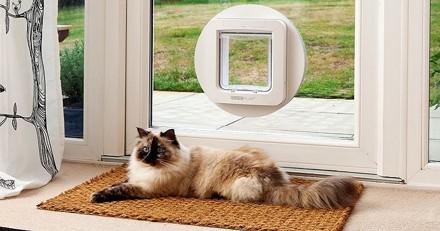 Comment choisir la meilleure chatière pour chat en 2021 ?