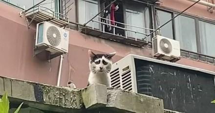 Quand vous verrez ce chaton, vous aurez envie de le serrer dans vos bras (comme 2 millions d'internautes)