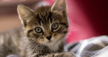 Maltraitance animale : ils vendaient des chats en fournissant de faux certificats vétérinaires