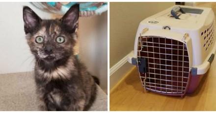 Un couple adopte un chaton, mais de retour à la maison ils ont une énorme surprise