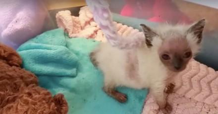 Ce chaton qui ressemble à un alien se rétablit de manière remarquable (Photos)