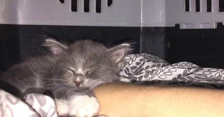 Elle sauve un chaton et a été très surprise de la réaction de son autre chat