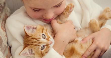 Pourquoi le chat fait-il du bien au moral ?