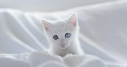 Il perd son chaton : en surfant sur Le Bon Coin il fait une triste découverte