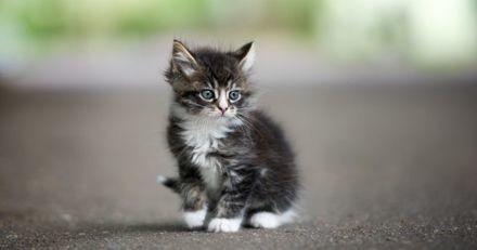 Mourant, ce chaton a survécu grâce à une aide inattendue