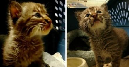 Un homme sauve un chaton puis réalise rapidement que quelque chose ne va pas du tout
