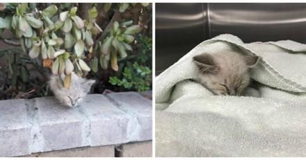 Elle vole au secours d'une minuscule chatte, lui trouve une famille et réalise son énorme erreur