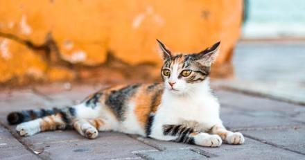 Chaton licorne : les volontaires du refuge sont bouche bée lors de la naissance du chat