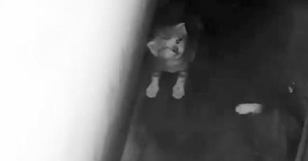 Ils entendent des miaulements et découvrent des chatons coincés dans un mur (Vidéo)