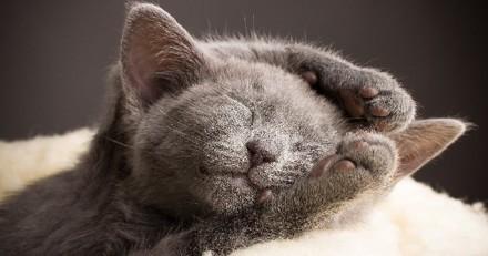 La fabuleuse évolution de 20 chatons devenus des chats !
