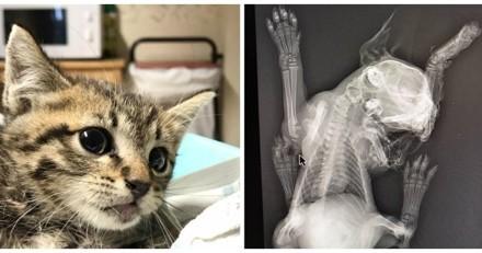 Il balance des chatons par la fenêtre de sa voiture, un vétérinaire pousse un émouvant coup de gueule