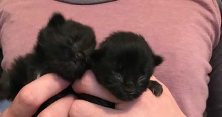 Il trouve deux minuscules chatons, un an plus tard ils sont méconnaissables !