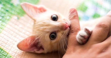 Ce chat sourd a apporté de la joie à une veuve qui partage le même handicap