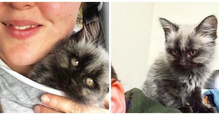 Ce chaton avait l'air d'une petite souris grise, aujourd'hui plus personne ne le reconnait !