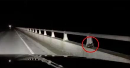 Un couple sauve un chaton apeuré sur le parapet d'un pont en pleine nuit