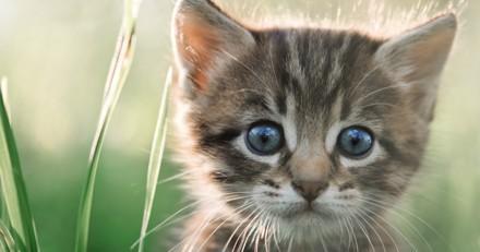 Top 10 des noms originaux de chats mâles en N pour 2017